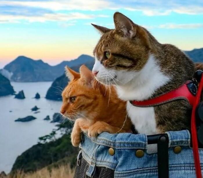 Невероятные путешествия невероятных кошек
