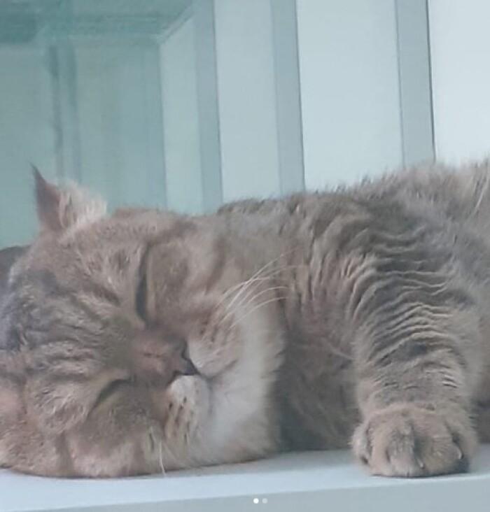 Котофото 138 — Гостиница для кошек «Маркиз»