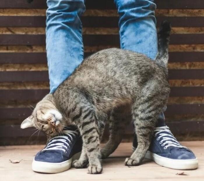 Зачем кошка трется о ноги хозяина?