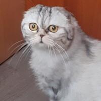 Котофото 69 — Гостиница для кошек «Маркиз»