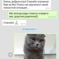 Котофото 91 — Гостиница для кошек «Маркиз»