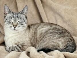 Котофото 55 — Гостиница для кошек «Маркиз»