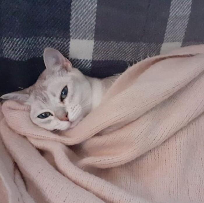 Спят усталые кисюли )