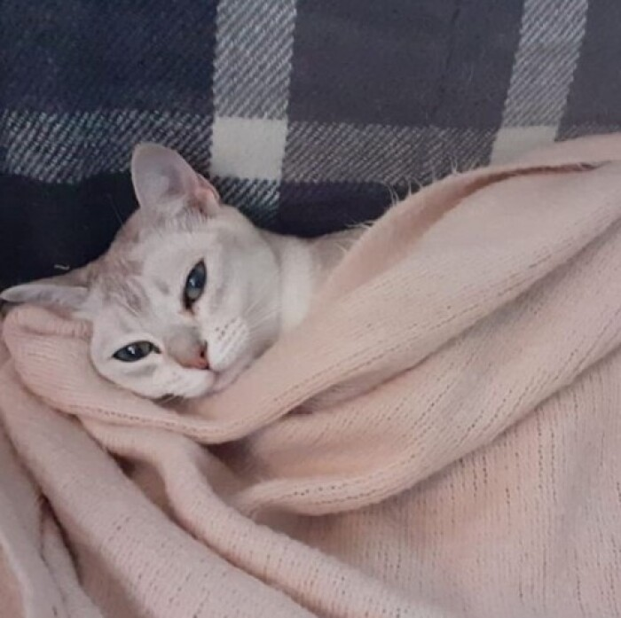 Cколько стоит передержка кошки в Зеленограде?