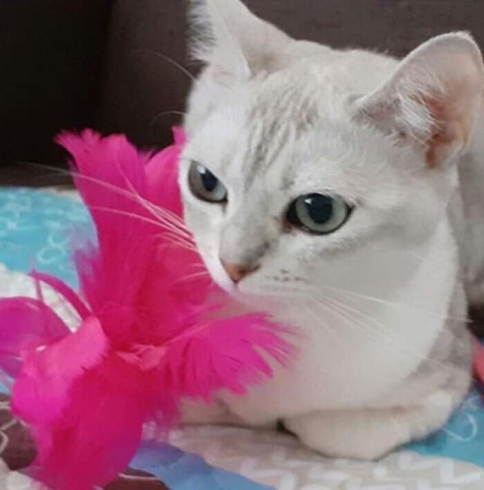 Кошечка Тера