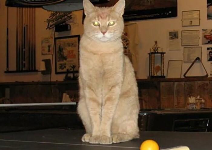 Знаменитый кот мэр из Аляски умер