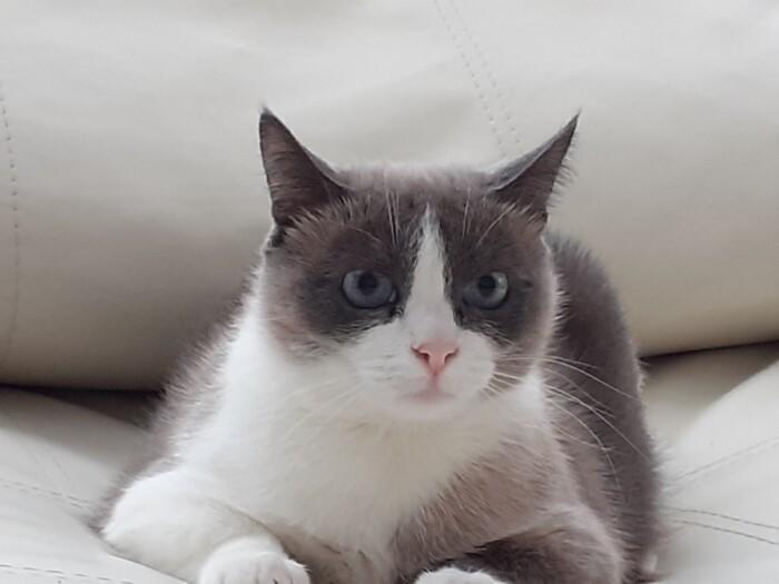 Кошечка Крема