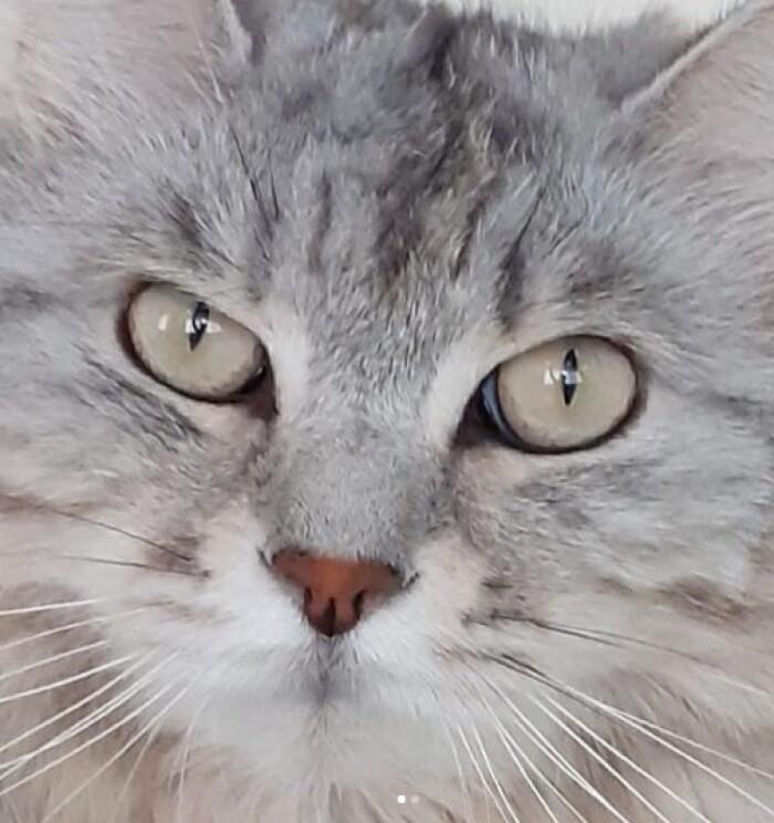 Котофото 137 — Гостиница для кошек «Маркиз»