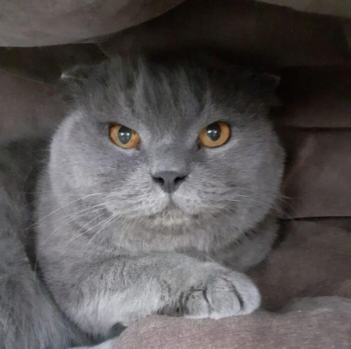 Почему кошки мурчат как трактор?