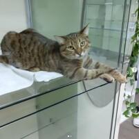 Котофото 110 — Гостиница для кошек «Маркиз»