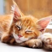 Передержка кошек, котов и котиков на время отпуска в Мытищи