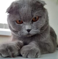 Котофото 85 — Гостиница для кошек «Маркиз»
