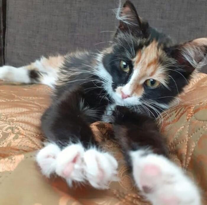 Котофото 78 — Гостиница для кошек «Маркиз»