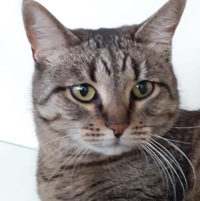 Котофото 142 — Гостиница для кошек «Маркиз»
