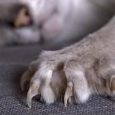 Уход за кошачьими когтями