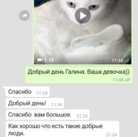 Котофото 92 — Гостиница для кошек «Маркиз»