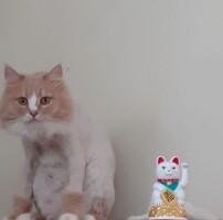 Котофото 136 — Гостиница для кошек «Маркиз»