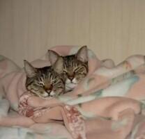 Котофото 54 — Гостиница для кошек «Маркиз»