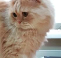 Котофото 109 — Гостиница для кошек «Маркиз»