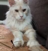 Котофото 119 — Гостиница для кошек «Маркиз»