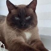 Cколько стоит передержка кошки в Дмитрове?