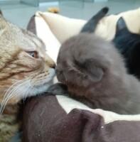 Котофото 88 — Гостиница для кошек «Маркиз»