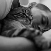 Целительские способности котов