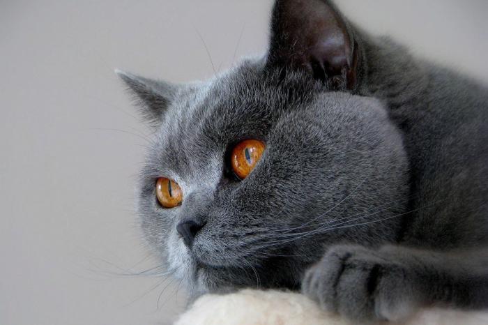 Самые интересные факты о том, как видят кошки