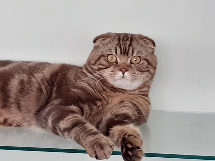 кот Бедо
