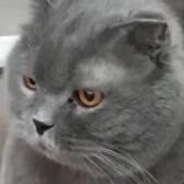 Отель для кошек в Пушкино