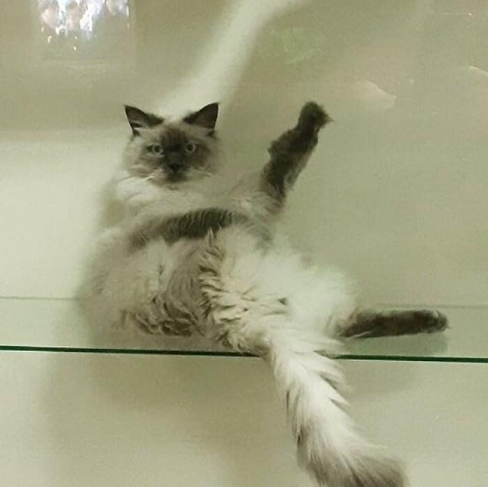 Котофото 118 — Гостиница для кошек «Маркиз»
