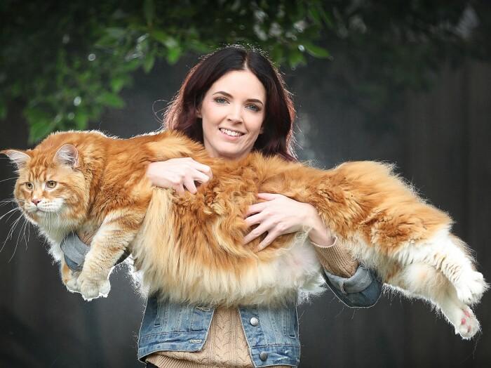 Самый БОЛЬШОЙ котик