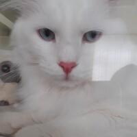 Котофото 74 — Гостиница для кошек «Маркиз»
