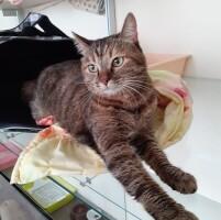 Котофото 94 — Гостиница для кошек «Маркиз»