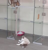 Котофото 117 — Гостиница для кошек «Маркиз»
