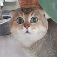 Котофото 77 — Гостиница для кошек «Маркиз»