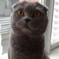 Котофото 57 — Гостиница для кошек «Маркиз»