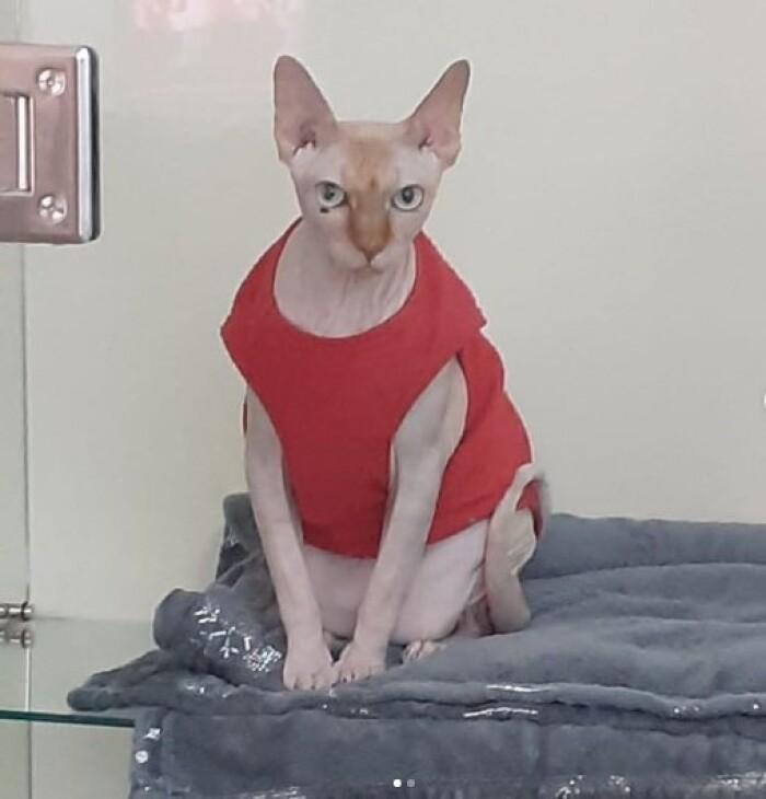 Котофото 139 — Гостиница для кошек «Маркиз»