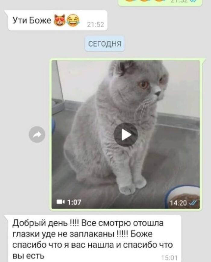 Котофото 108 — Гостиница для кошек «Маркиз»