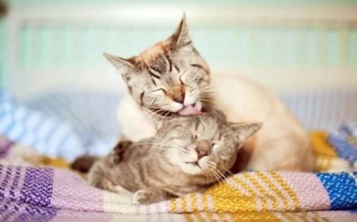 Умывание кошек