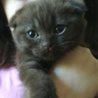 Котофото 105 — Гостиница для кошек «Маркиз»