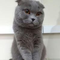 Котофото 56 — Гостиница для кошек «Маркиз»