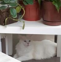 Котофото 80 — Гостиница для кошек «Маркиз»