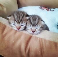 Котофото 87 — Гостиница для кошек «Маркиз»