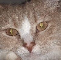 Котофото 122 — Гостиница для кошек «Маркиз»