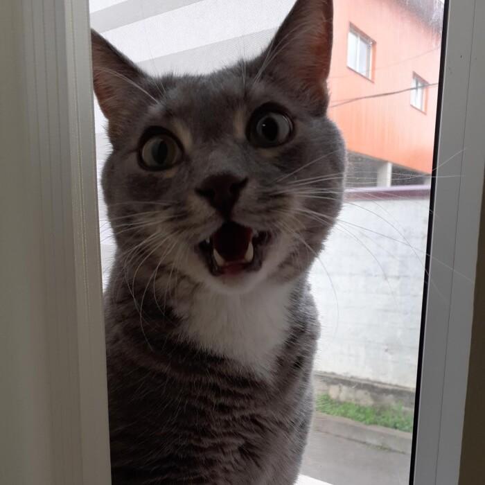 Котофото 72 — Гостиница для кошек «Маркиз»