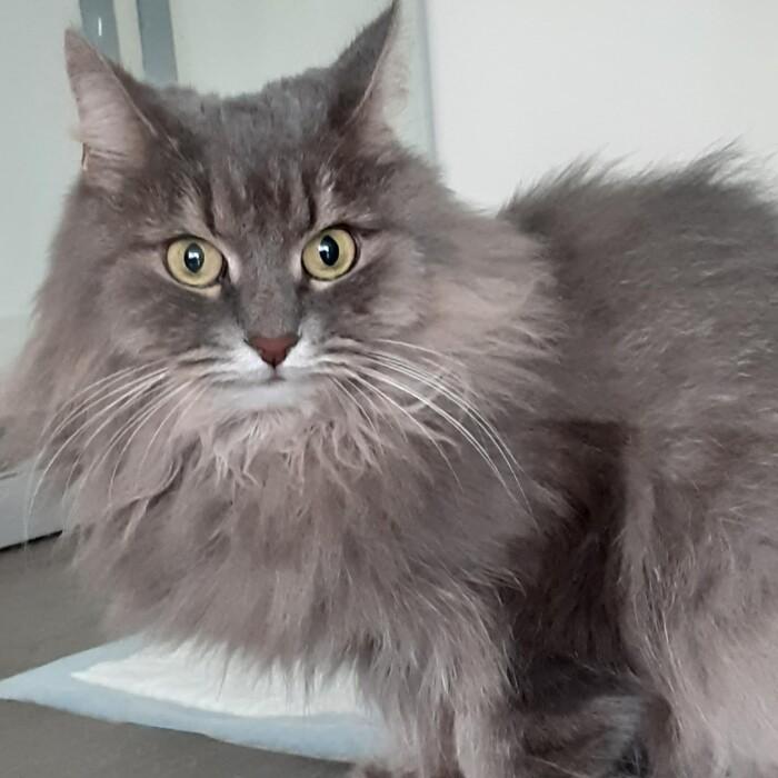 Котофото 76 — Гостиница для кошек «Маркиз»