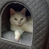 Котофото 141 — Гостиница для кошек «Маркиз»
