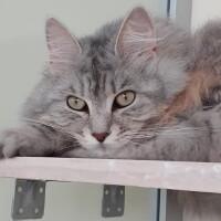 Котофото 82 — Гостиница для кошек «Маркиз»