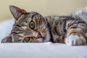 Котофото 59 — Гостиница для кошек «Маркиз»